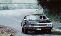 Impala Nights