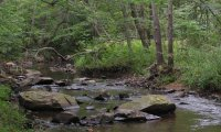 Rivendell Forest