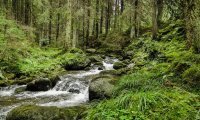 Spring Forest Creek