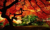 Below the trees