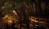 Nighttime by a Noisy Swamp