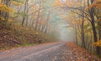 Sounds of an Autumn Forest