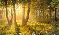 Fairy Sun Wood