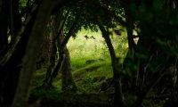 Walking through an Elven Wood
