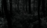 A simple forest at night time