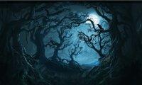 Forbidden Forest at Night