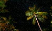 Asleep in Key Largo