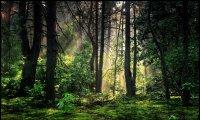 Forêt forêt