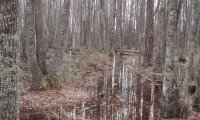 Swamp Ambient
