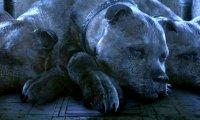 Don't Wake Fluffy