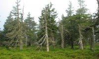 Minimum wildlife forest