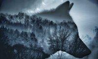 Thunderstorm in Moonlit Forest