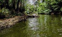 Jungle river boat cruise sounds