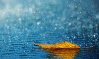 Mild Rainfall