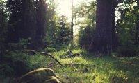 Trekking through the forest
