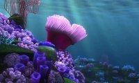 "The Ocean ~ Add to ""Nemo's Egg"""