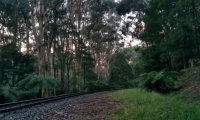 Puffing Billy - Train with birdsong and hooman