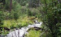 Large Fauna of the Fish Creek Trail