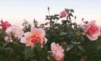 Evening In The Garden