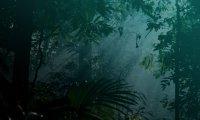 Peaceful Jungle Night