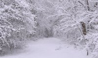 Snowy Bliss