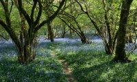 Walk to Ashbarrow - Humblewood