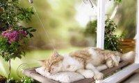 Sleepy Summer Evening