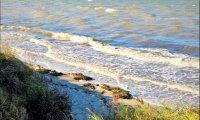 Sea, sand, seagulls