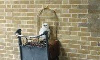 Harry Potter Kings Cross
