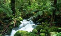 Stroll through the rainforest in Brazil