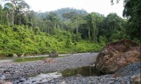 The sounds of the Triassic Jungle
