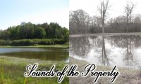 Sounds of the Property