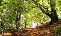 The vast woods