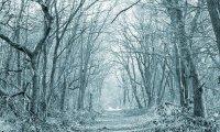 Narnia's Winter Woods