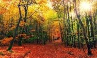 Hike Through the Autumn Woods