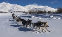 An arctic mood with Dogsled team (thanks to amzy!)