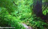 Walking through an Elven Wood2