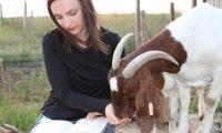 Goat Farm Love