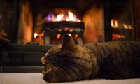 light rain with softly crackling fireplace and steady purrs