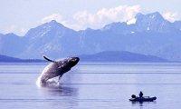 Alaskan Whale Voyage