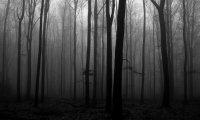 A somewhat disturbing forest.