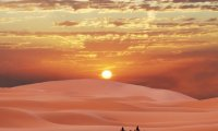 Desert Journey with Camels and Drum Stings