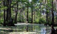 Wichioga Swamp