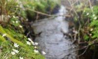 Nature Babbling Brook
