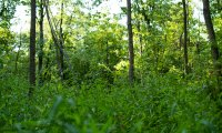 A quiet walk through the woods