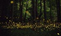 Narnian Night