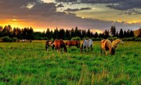 A grassy meadow with horses grazing somewhere nearby