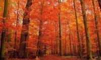 Autumn Forest with Dark