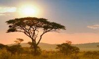 Learn about safari animals!