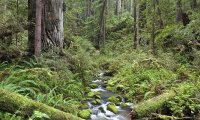California summer forest